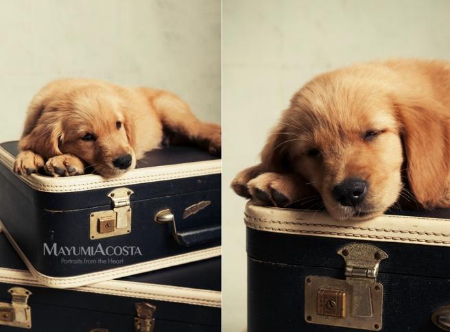 Studio Family Portraits celebrating the arrival of baby dog with Mayumi Acosta Photography